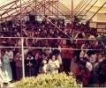 1978년,  5월 부처님 오신날에